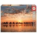 Puzzle Kamele im Sonnenuntergang 1000T